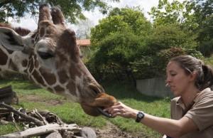 dierentuin-kleding-verzorger