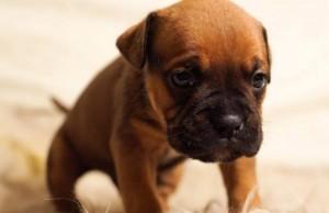 uitstelgedrag-tips-puppy