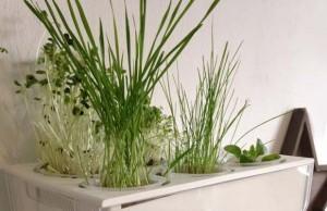 aquafarm-review-aquaponics-thuis